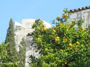 Citrus with Castle backdrop
