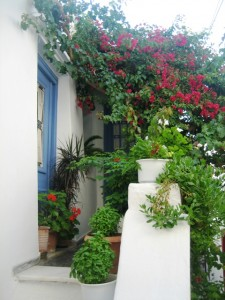 Container gardens line the narrow alleys