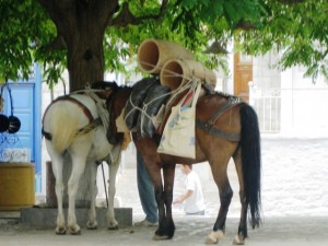 Horses and donkeys instead of cars in Hydra