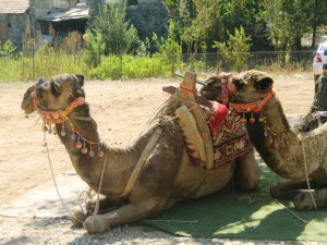 Oh yes, and camel rides!