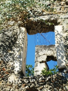 Vine covered window on the past