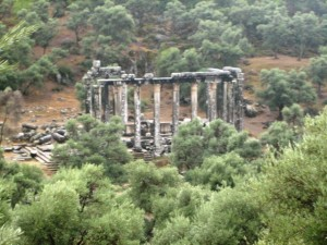 From the path to amphitheater you get an aerial view of the Temple nestled among the olive trees